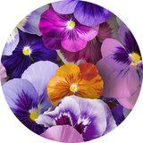 rond tafelzeil viooltjes 160cm