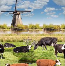 45x140cm Restje tafelzeil molens en koeien