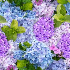 Tafelzeil hortensia foto print