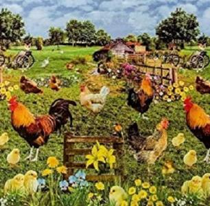 Tafelzeil kippen en kuikens