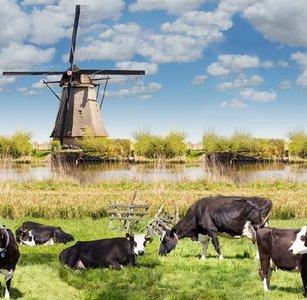tafelzeil koe en molens landschap