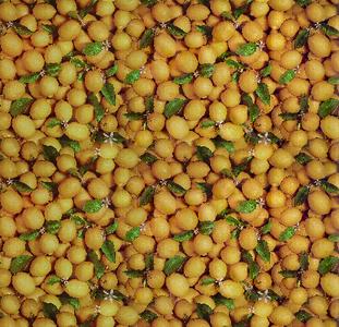 Tafelzeil citroentjes fris